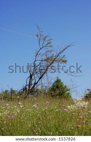 Lonely dead tree in green field - stock photo