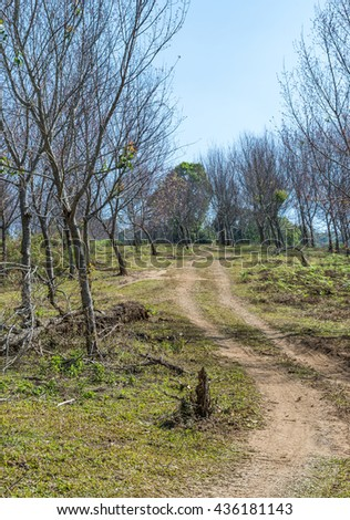 Lonely dirt road to the top of hill in the dry forest of the national park. - stock photo