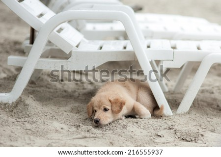 Lonely dog on a beach - stock photo