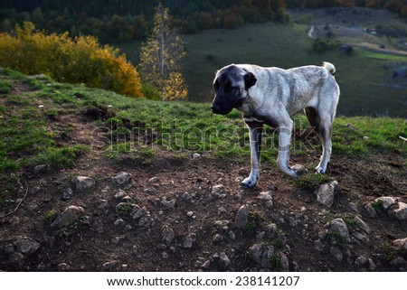 lonely dog outdoor - stock photo