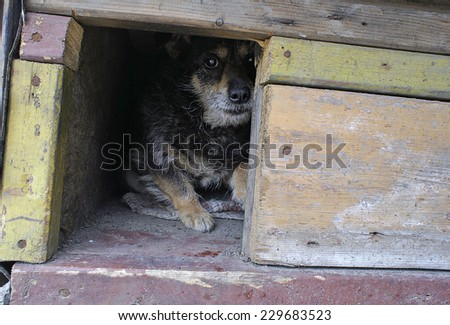 Lonely dog watching out of his kennel - stock photo