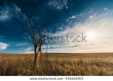Lonely dried tree in field against cloudscape and setting sun - stock photo