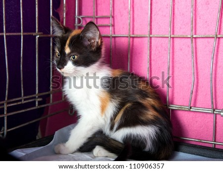 Lonely Homeless Kitten in a Cage in the Animal Shelter - stock photo