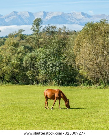 Lonely horse on the background of snow cowered peaks of the Pirin mountains. View from Belitsa region - Bulgaria - stock photo