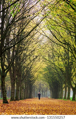 Lonely jogger in het Amsterdamse bos (Amsterdam wood) in the Netherlands. - stock photo
