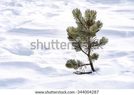 Lonely Little fir-tree on the snow - stock photo
