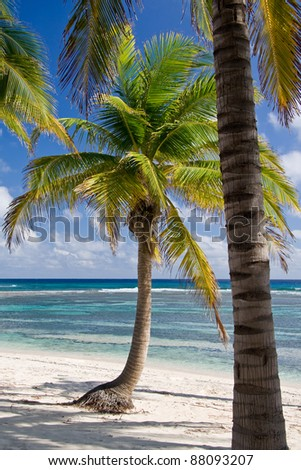Lonely Palm Trees - stock photo