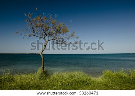 Lonely pine tree at the seaside - stock photo