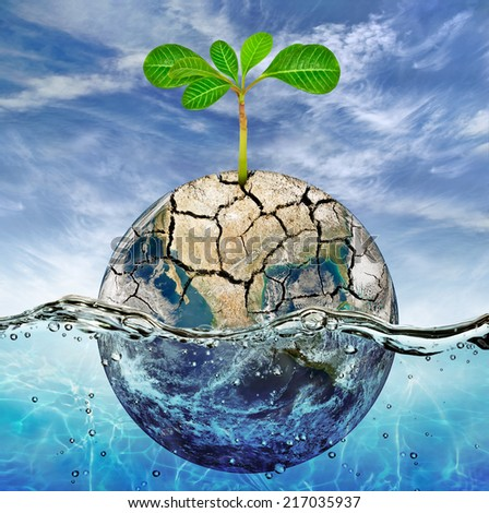 "Lonely plant in the parched earth submerged in the ocean ""Elements of this image furnished by NASA"" - stock photo"