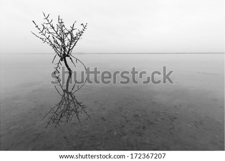 Lonely plant in water - stock photo