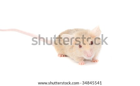 Lonely redhead mouse, isolated on white. - stock photo