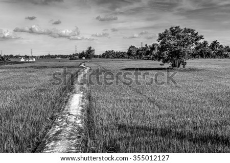 Lonely road in field. Monochrome  - stock photo