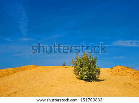 Lonely shrub on the sand hill in sunny day - stock photo