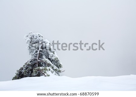 Lonely snow-covered fur-tree against the gray sky. An open composition with a place for the text - stock photo