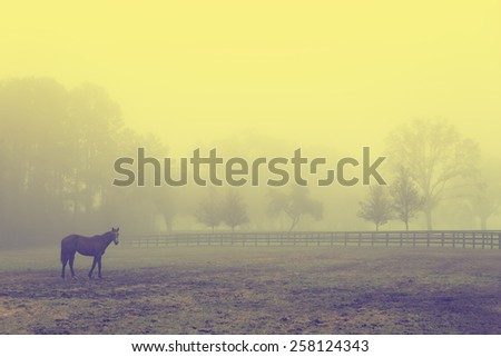 Lonely solitary horse equine in an open grassy field meadow pasture in the fog looking empty dismal depressing desolate bleak stark grim dramatic moody drab dim dull - stock photo