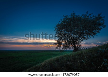 Lonely tree against a blue sky at sunset - stock photo