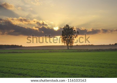 Lonely tree against at sunset. - stock photo