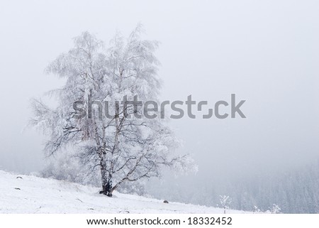 Lonely tree and road in fog at mountain Tien Shan - stock photo