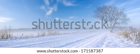 Lonely tree at off-road in the winter - stock photo