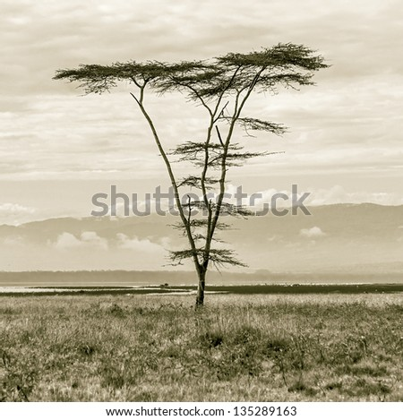 Lonely tree at the Lake Nakuru National Park - Kenya, Eastern Africa (stylized retro) - stock photo