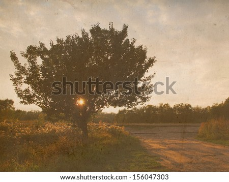 lonely tree at the road on sunset, retro styled photo  - stock photo