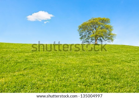 Lonely tree at the top of the hill - stock photo