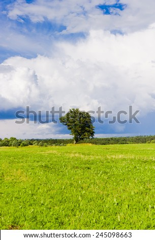 Lonely Tree Calm Solitude  - stock photo