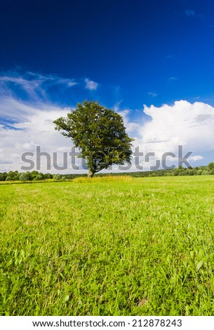 Lonely Tree Grass Land  - stock photo