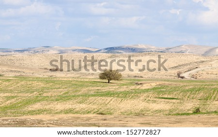Lonely tree in a desert front of the hills beneath the clouds - stock photo
