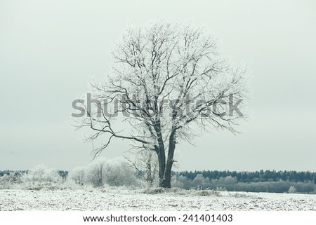 lonely tree in a field frosted frosty winter landscape - stock photo