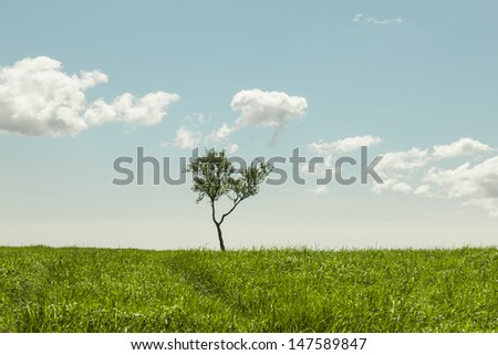 Lonely tree in a grassy meadow on a beautiful summer day - stock photo
