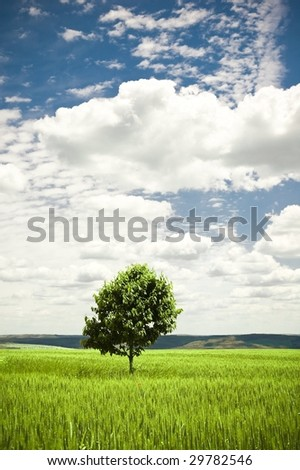 Lonely tree in a green wheat field - stock photo