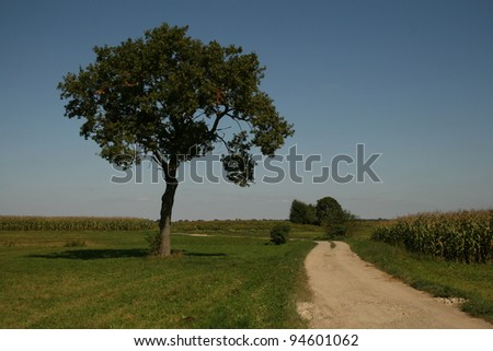 Lonely tree in an open green field in spring time - stock photo