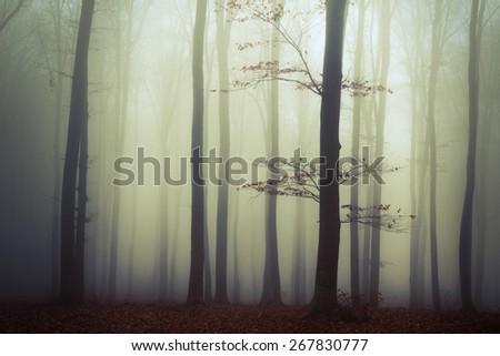 Lonely tree in dark mist - stock photo
