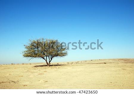 Lonely tree in desert Negev. - stock photo