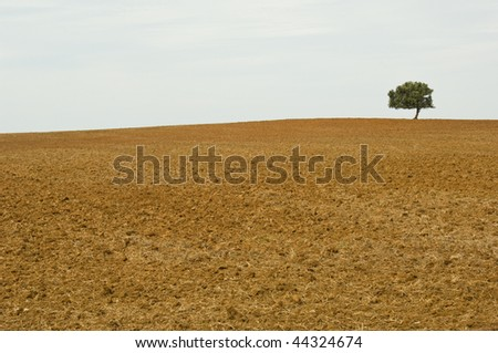 Lonely tree in drought wasteland - stock photo