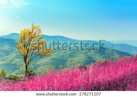 lonely tree in grass field on the top of a blue mountain against bright blue sky - stock photo