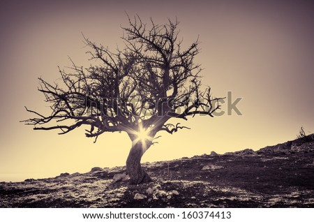 Lonely tree in mountain. Composition of nature. - stock photo