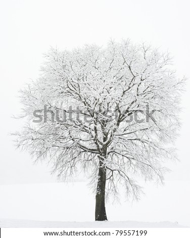 lonely tree in the snow - stock photo