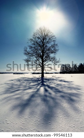 lonely tree in winter - stock photo