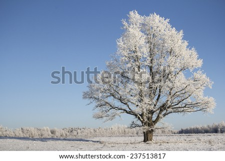 Lonely tree in winter against the blue sky - stock photo