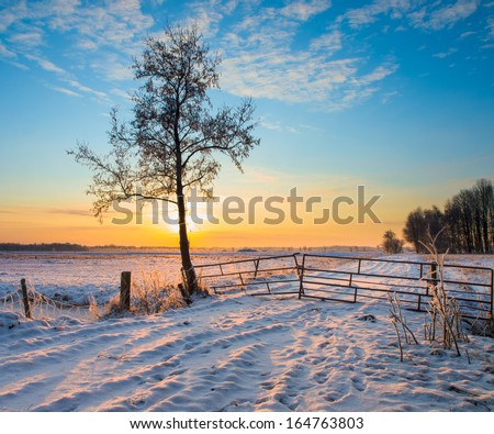 Lonely Tree in Winter Landscape with Snowy Fields and Blue Sky in Drenthe Netherlands - stock photo