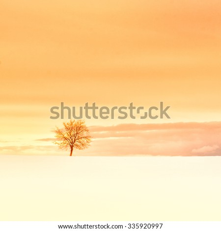 lonely tree in winter season with snow - stock photo