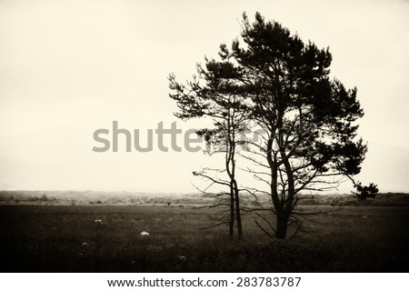 Lonely tree on a background of storm clouds. - stock photo