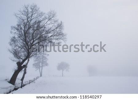 Lonely tree on a foggy winter day - stock photo