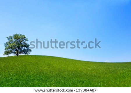 Lonely tree on a green meadow with blue cloudless sky - stock photo