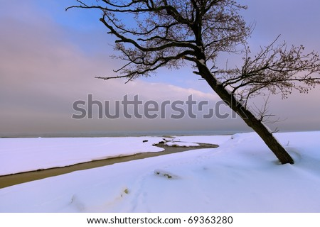 lonely tree on the beach - stock photo