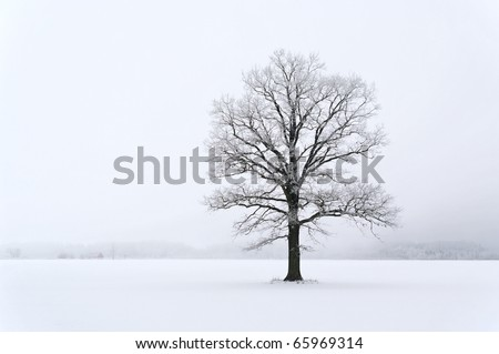 Lonely tree on the land in mist time. - stock photo