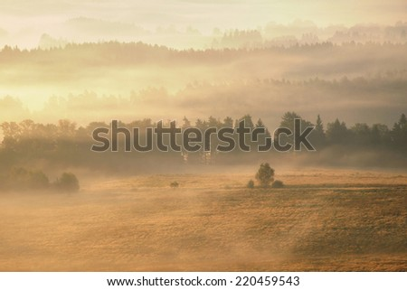 Lonely tree on the morning misty meadow in national park Bohemian Switzerland - stock photo