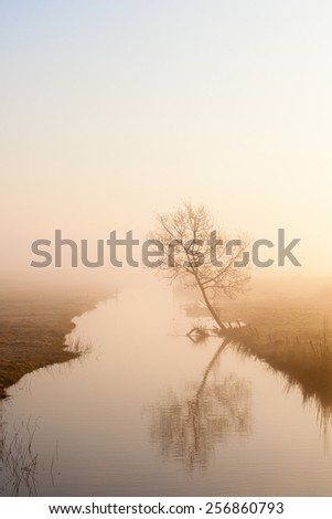 Lonely tree on the river in misty morning light - stock photo